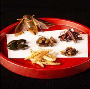 パルコ昆虫食レストラン9